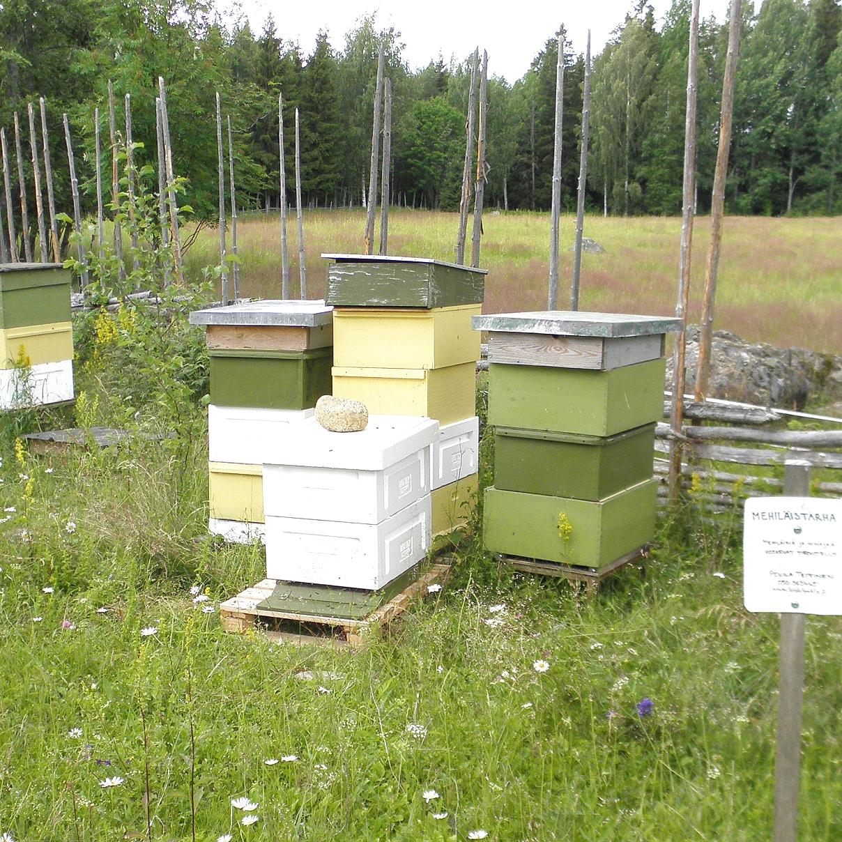 Mehiläistarhaajan pesiä ruohoa kasvavalla miespihalla pisteaidan vieressä.