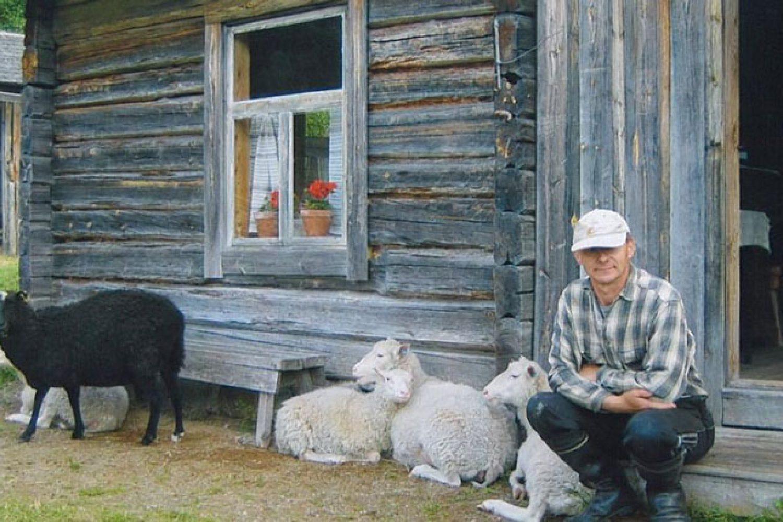 Museotilan pehtoori istu tuvan rappusilla vieressään kesätyöntekijät eli lampaat.
